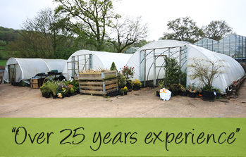 wholesale plant nursery Devon